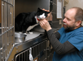 cat-vet-services-boarding